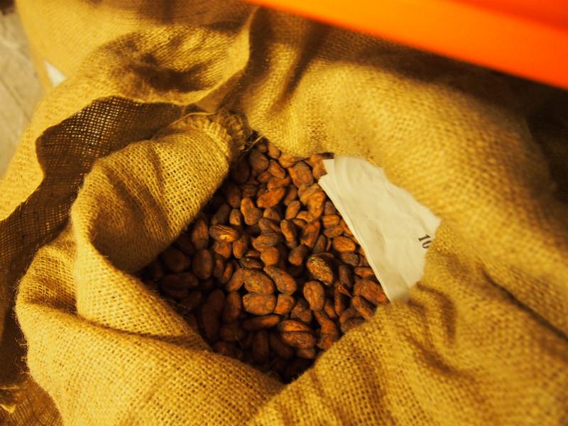 Nicalagua cacao